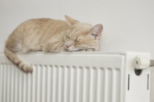Geniessen Sie die Wärme, um mehr müssen Sie sich nicht kümmern