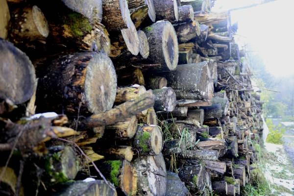 Holz ist nachwachsende Energie
